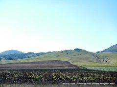 farmlands-Los Osos