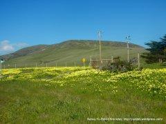 hillsides full of wildflowers