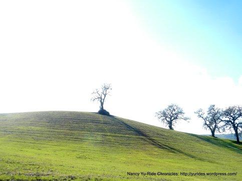 soft hillsides