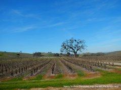 vineyards on El Pomar