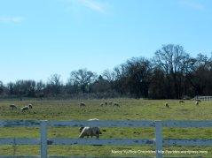 sheep ranch off CA 41