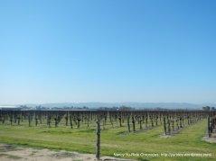 many vineyards