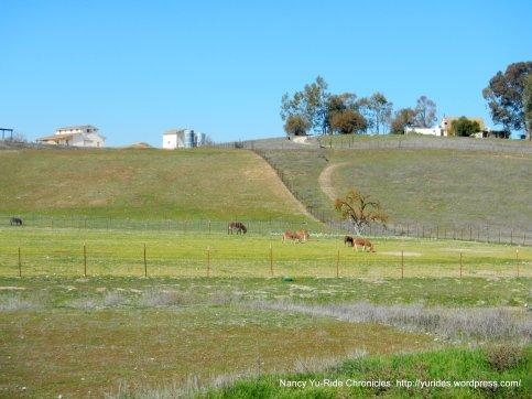 grazing donkeys