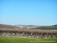 vineyards galore
