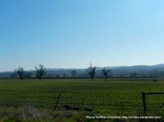 green pastoral fields