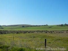vast green grasslands