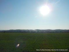 gorgeous green fields