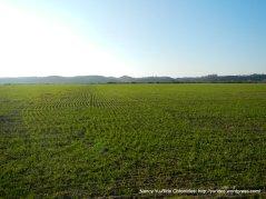 green green land