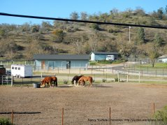 horse ranch on Nacimiento Lake Dr