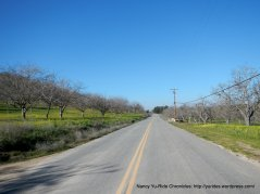rolling through the nut orchards