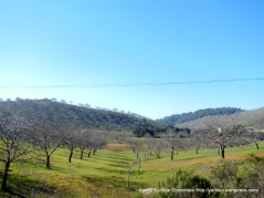 colorful rolling hills-orchards & vineyards