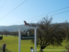 horse ranch & orchard
