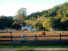 horse ranch on Novato Blvd