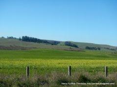 gorgeous flowering fields