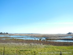 Grizzly Bay marshes