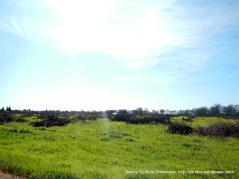 vineyard clearings