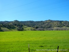 green grasslands in the valley