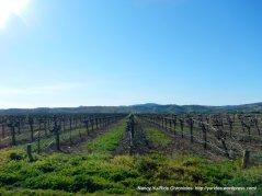 vinyards along Abernathy