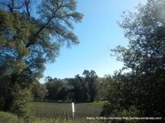 Sunol vineyard