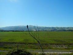 Sunol open grasslands