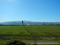Sunol open grasslands