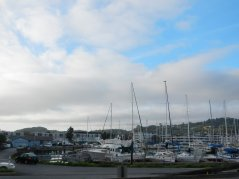 Marin Yacht Club harbor