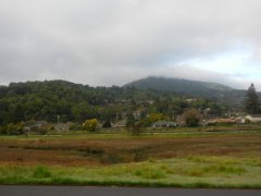 view of Mt Tam from Bon Air Rd