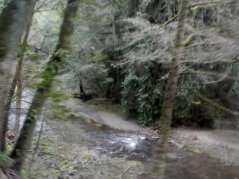 Lagunitas Creek