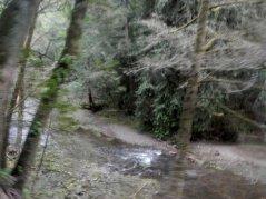 Lagunitas Creek