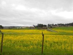 overflowing fields of wildflowers