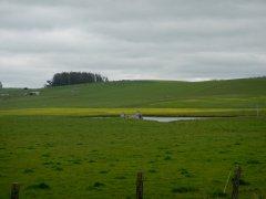 green pastoral lands