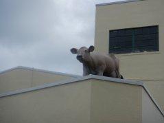 cow on the roof at Petaluma Creamery