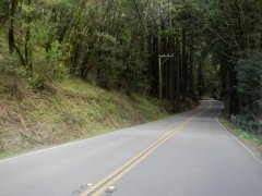entering the redwood forest-Lucas Valley