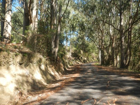 wooded section of climb