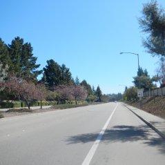 Bollinger Canyon Rd NE