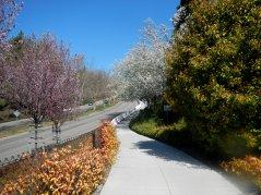 bike route on Bollinger
