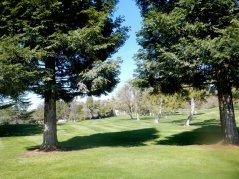 Roundhill greens