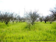 popping flourescent green grass