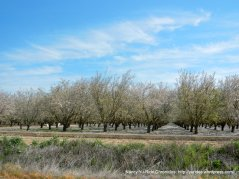 more orchards