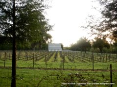 vineyard on Redwood Rd