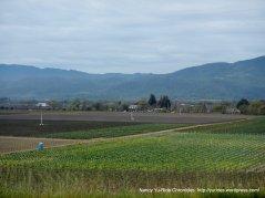 magnificent Napa Valley