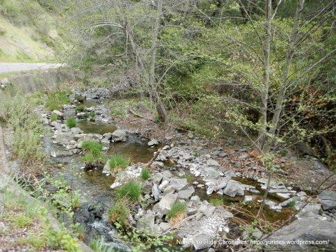 Maxwell Creek