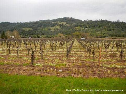 Silverado Trail vineyards
