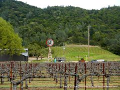 one of many wineries & vineyards