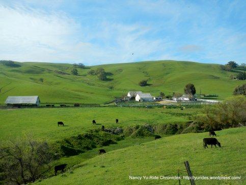 bucolic pastoral scene