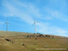 cows and wind mills