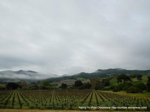 acres of pinot Noir vineyards