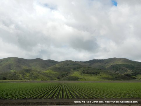 gorgeous hills and crops