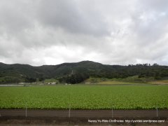 agricultural fields