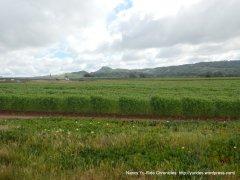 agricultural fields on E Clark